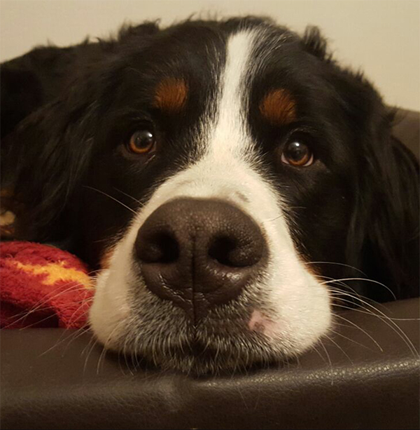 Riva Therapiehund